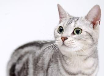 Стрижка котов и кошек Киев фото 1