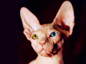 Стрижка котов и кошек Запорожье фото 10