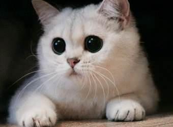 Стрижка котов и кошек Луцк фото 11