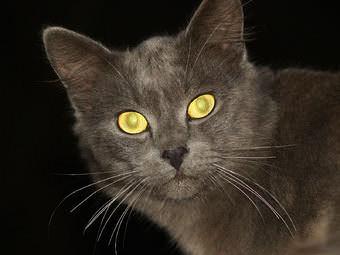 Стрижка котов и кошек Тернополь фото 12