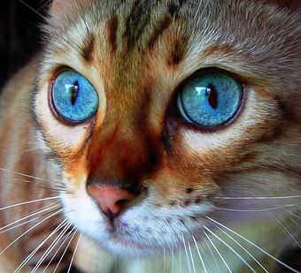 Стрижка котов и кошек Хмельницкий фото 13