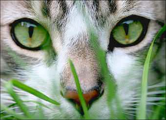 Стрижка котов и кошек Львов фото 14