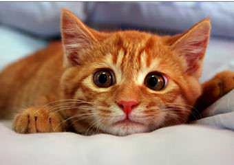 Стрижка котов и кошек Бровары фото 15