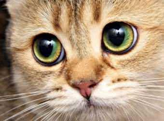 Стрижка котов и кошек Кировоград фото 16