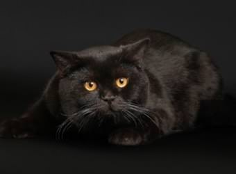 Стрижка котов и кошек Житомир фото 18