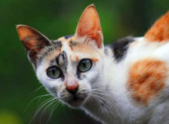 Стрижка котов и кошек Черкасы фото 20