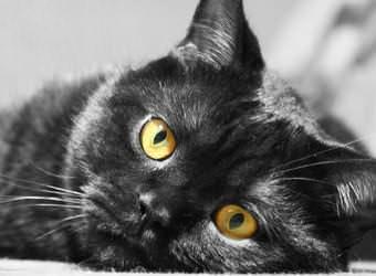 Стрижка котов и кошек Харьков фото 4