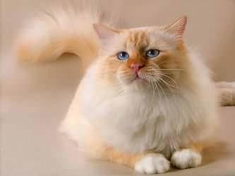 Стрижка котов и кошек Винница фото 5