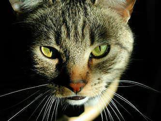 Стрижка котов и кошек Днепропетровск фото 6
