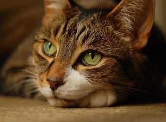Стрижка котов и кошек Одесса фото 7
