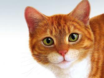 Стрижка котов и кошек Белая Церковь фото 8
