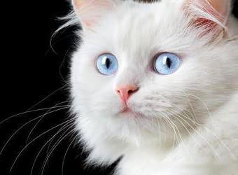 Стрижка котов и кошек Херсон фото 9