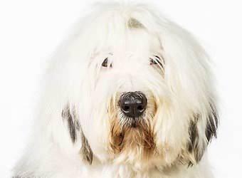 Стрижка собак Тернополь фото 12