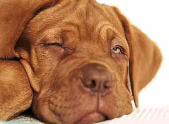 Стрижка собак Хмельницкий фото 13