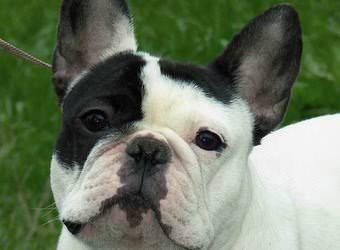Стрижка собак Мелитополь фото 17