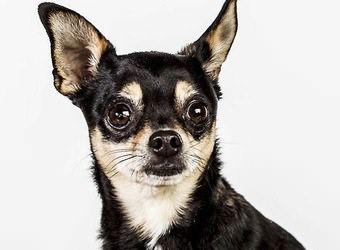 Стрижка собак Житомир фото 18