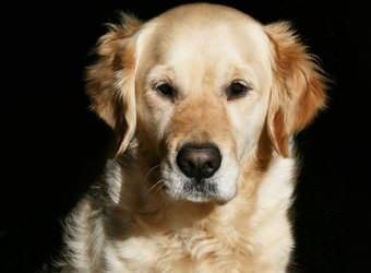 Стрижка собак Сумы фото 19