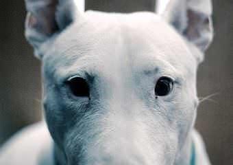 Стрижка собак Черновцы фото 22