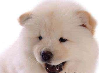 Стрижка собак Ивано-Франковск фото 23