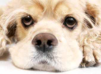 Стрижка собак Ровно фото 25