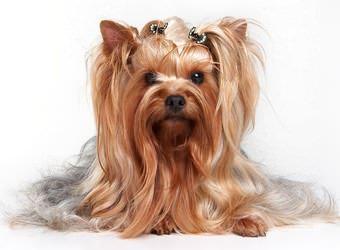 Стрижка собак Винница фото 5