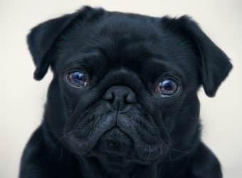 Стрижка собак Одесса фото 7