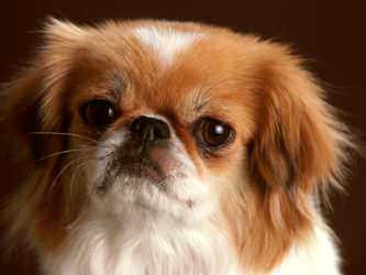 Стрижка собак Белая Церковь фото 8
