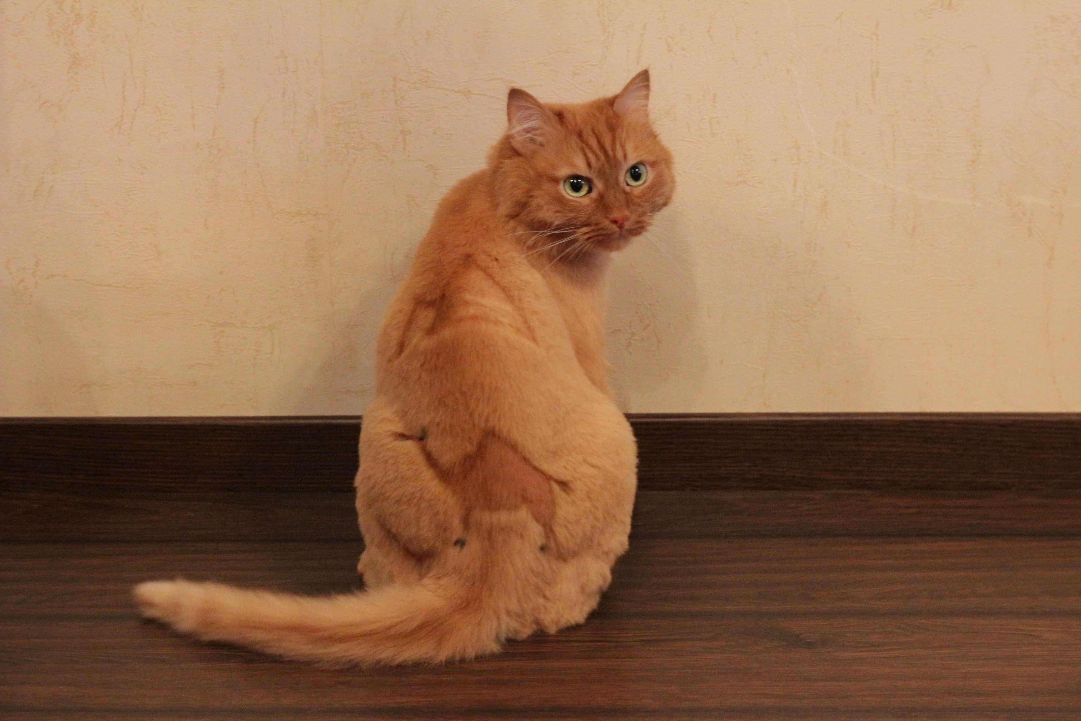 Почему не получается маникюр кошачий глаз