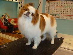 Стрижка собаки породы фото 1