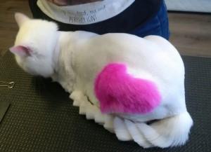 Стрижка собак и котов - работы-примеры-отзывы