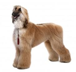 Стрижка афганской борзой собаки фото 4