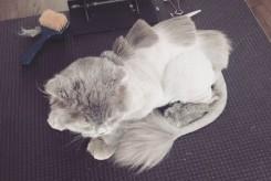 креативная стрижка кота